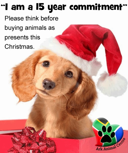 On Pets As Presents Fun Animals Wiki Videos Pictures
