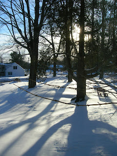 Shadows in winter