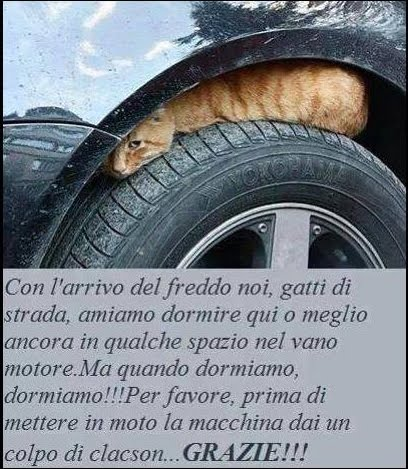 Fai attenzione ai gattini!!