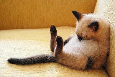 วิธีปฐมพยาบาลแมว