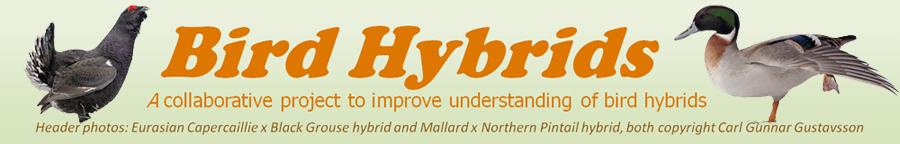 Bird Hybrids