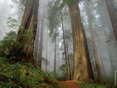 Peluang Bisnis Usaha Pohon Hias Tanaman Untung Besar Yang Sangat Menjanjikan