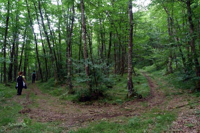 walking Redes Natural Park Castañetu Montes Asturias