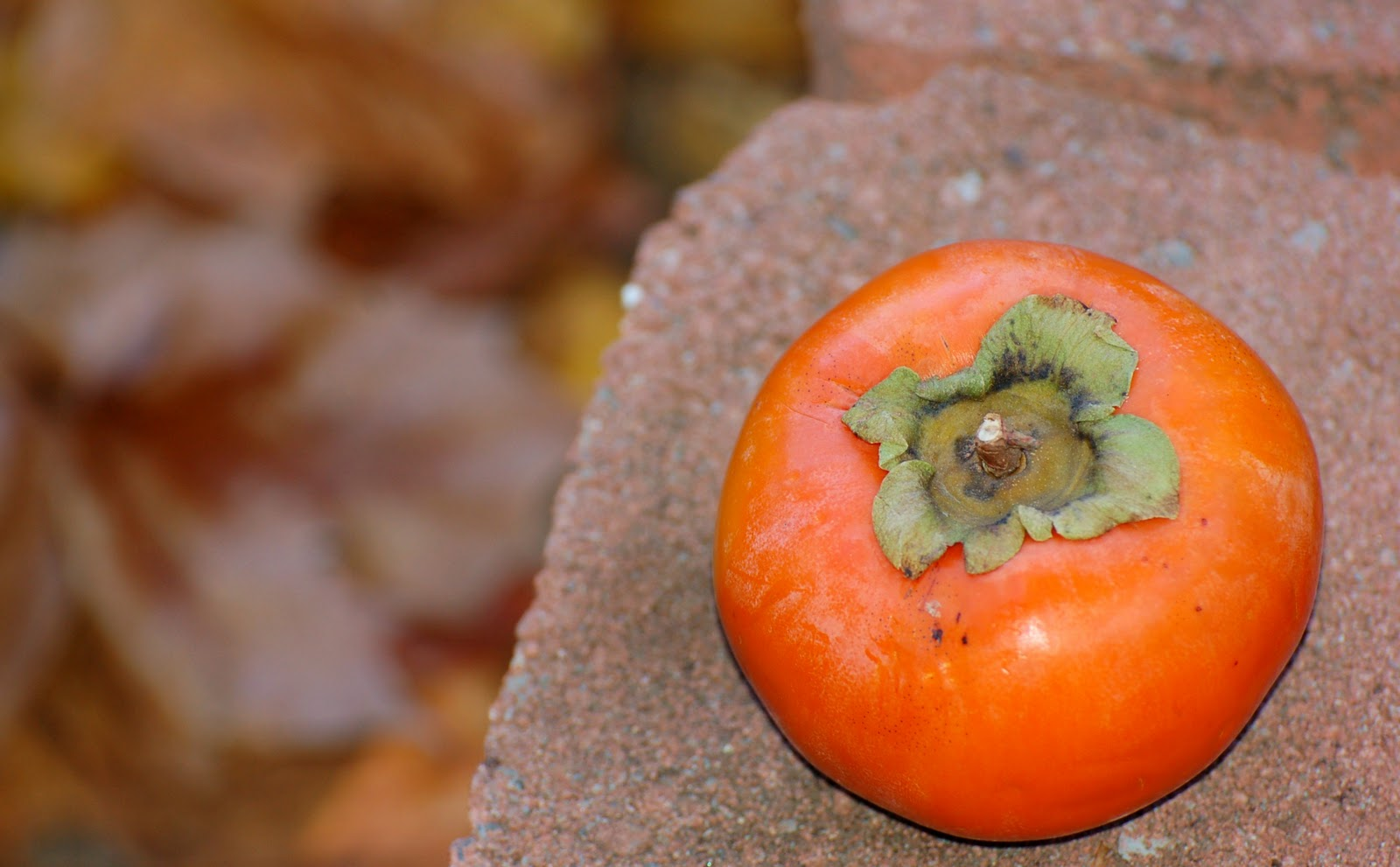 Pickled: Ginger-Spiked Persimmon Pudding Bread