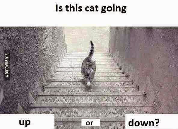 It's not about the dress, now it's #Catgate... up or down?