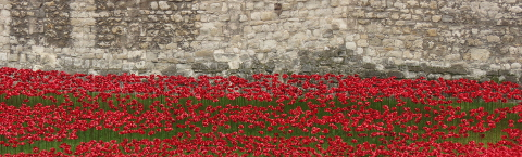 Blood Swept Lands and Seas of Red at the Tower of London, November 2014