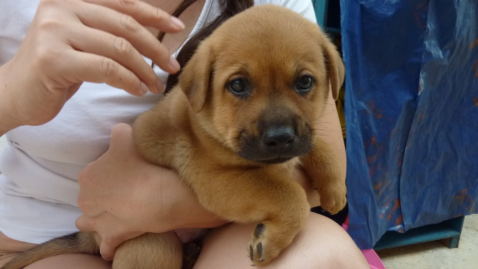 PetuniaLee™: Mongrel Puppies Need a Home Дворняжка Щенок