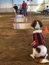 LUNA- SCENTHURDLE DOG MASTER