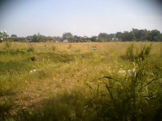 Di jual tanah lokasi Mojosari - pacet  Luas 30 hektar Jawa Timur .