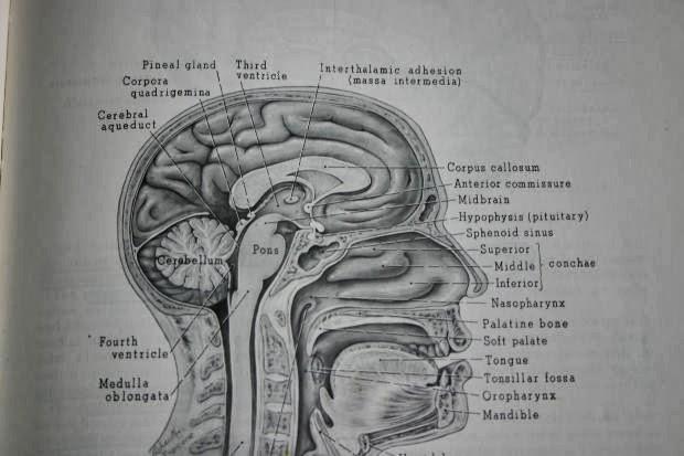 Partes de la mente