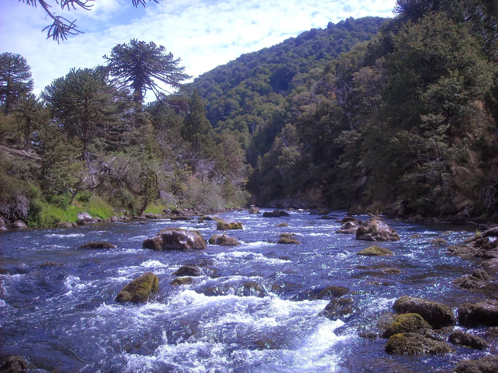 First cast fly fishing diy fly fishing patagonia for Fly fishing argentina