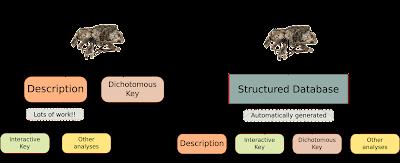 Taxonomic data models