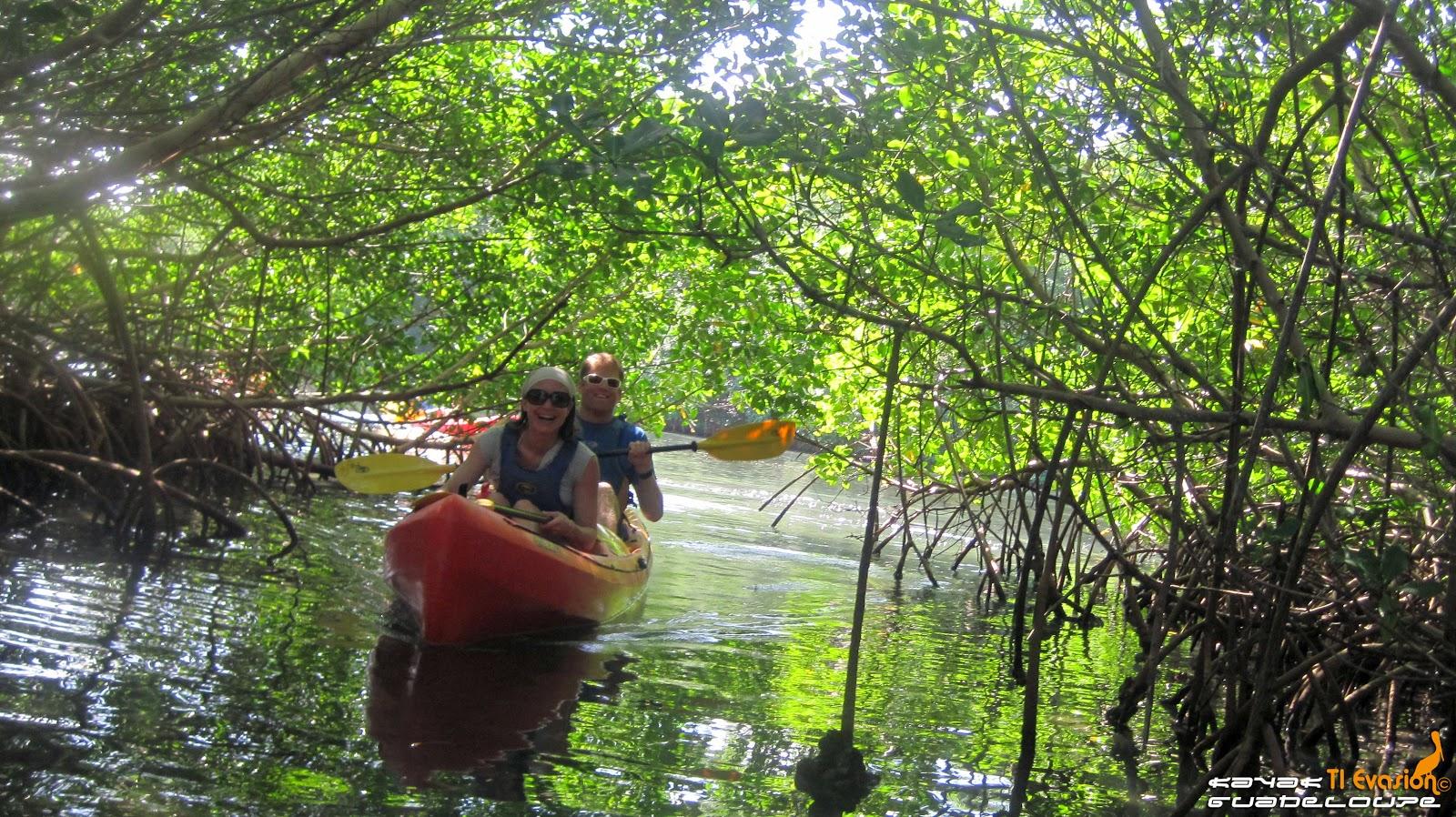 kayak mangrove guadeloupe