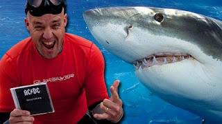 A los tiburones les gusta AC/DC