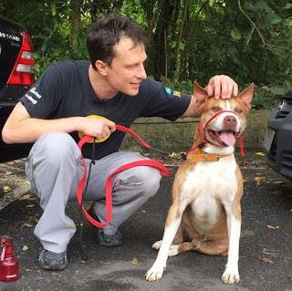 Alexandre Rossi, o Dr. Pet, esteve em Santos para fazer avaliação de Guga, pit bull de 5 anos