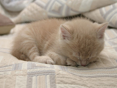 Mengapa induk kucing tidak menyusui anaknya?