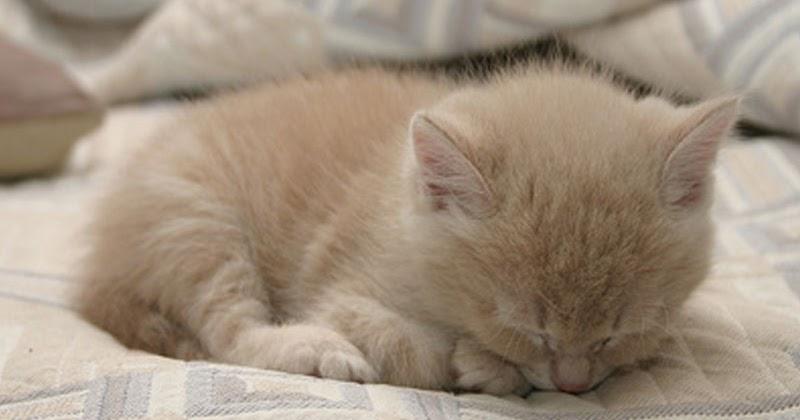 Kucing Gue Mengapa Induk Kucing Tidak Menyusui Anaknya