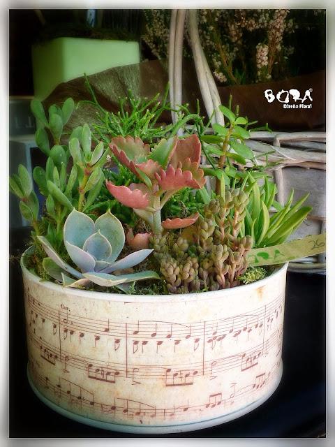regalo cactus