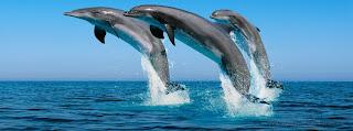 Belle photo de couverture Facebook dauphin