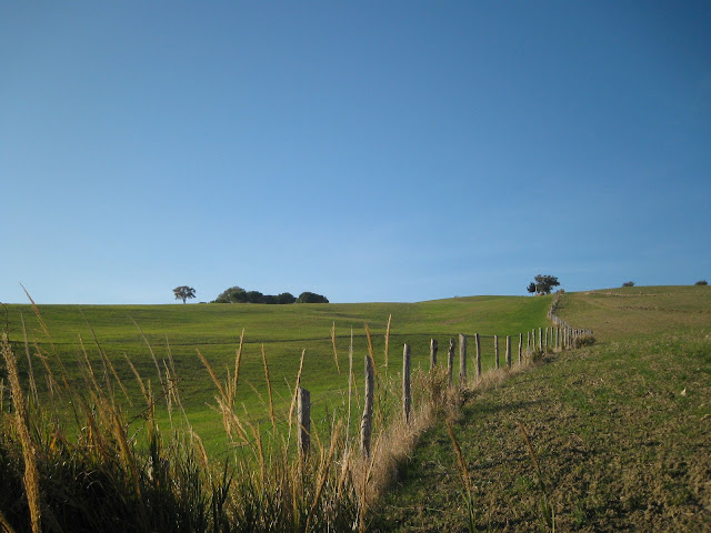 Winter in Tuscany: Nothing but green fields, trees and a fence
