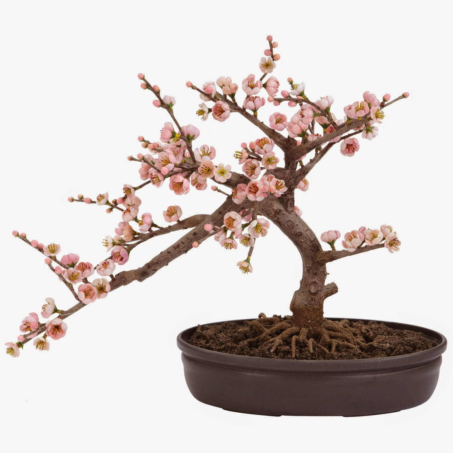 Quality Silk Plants Blog Artificial Bonsai Trees In Any Decor