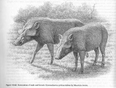 jabalies extintos Nyanzachoerus