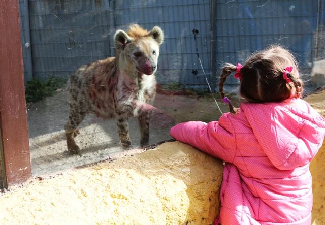 Hienas en Selwo Aventura Estepona