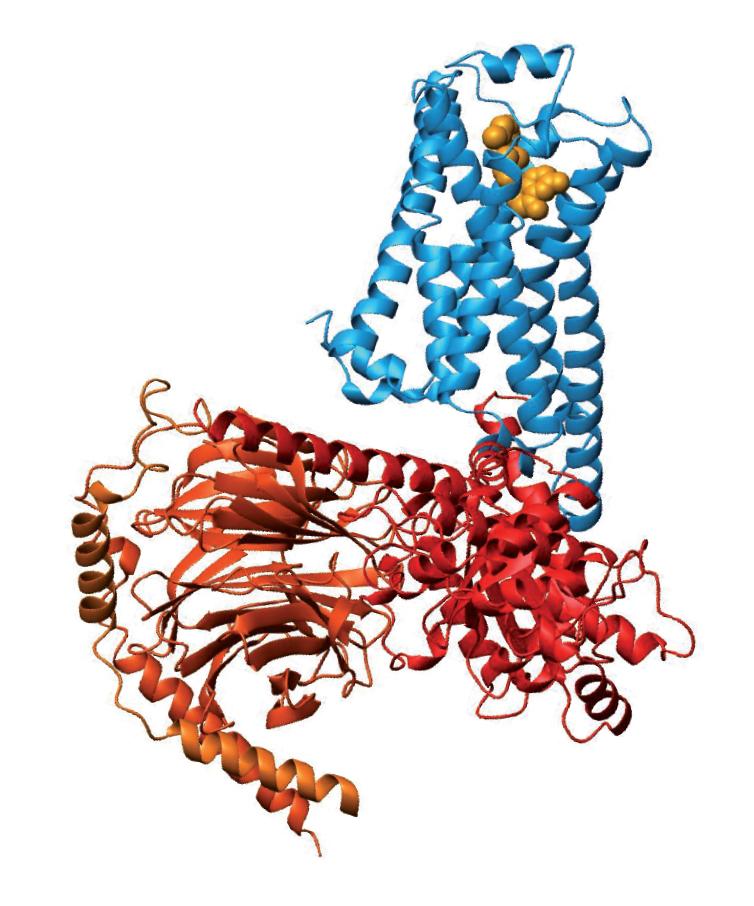 Modelo de un receptor acoplado a una proteína G