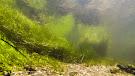 Strona River