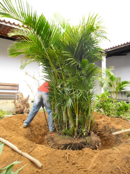 plantas bordaduras jardimJardim do Éden – Paisagismo e Jardins