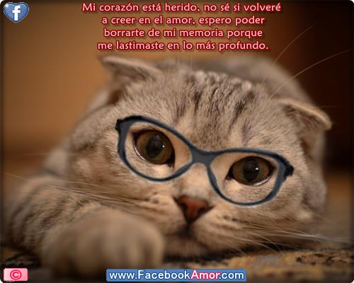 Imágenes bonitas de gatos tristes con frases compartir en facebook postales amor, amistad, desamor, cumpleaños, celebraciones, bautizos , bodas,