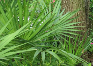 Benefits of Saw Palmetto for Men | LIVESTRONG.COM