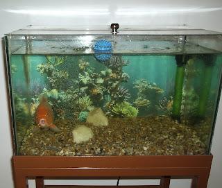 Na inteligência, é comprovado que o peixe vivo vale muito mais vivo do que morto.