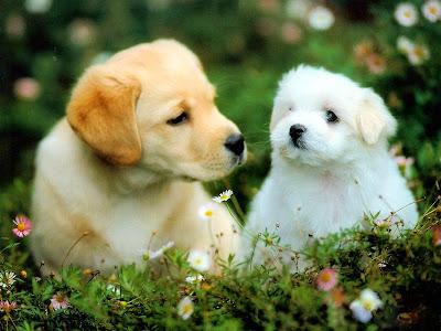 beautiful puppies dogs