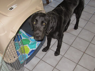 Dewey standing in front of his crate at Al and Rita's