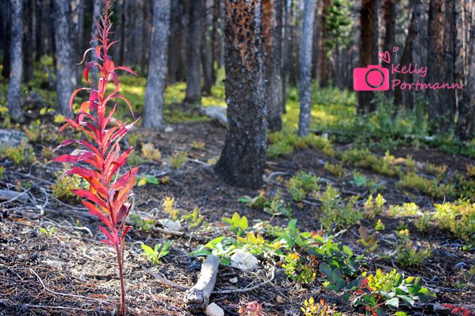 Colorado, Nature, RAW Artist, Mixology