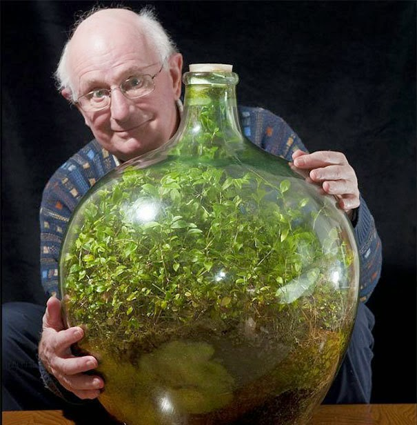 David is 80 years old, he started the garden when he was 26. - His Magical Bottle Garden Has Been Flourishing For 54 Years. You Can Make One Too.