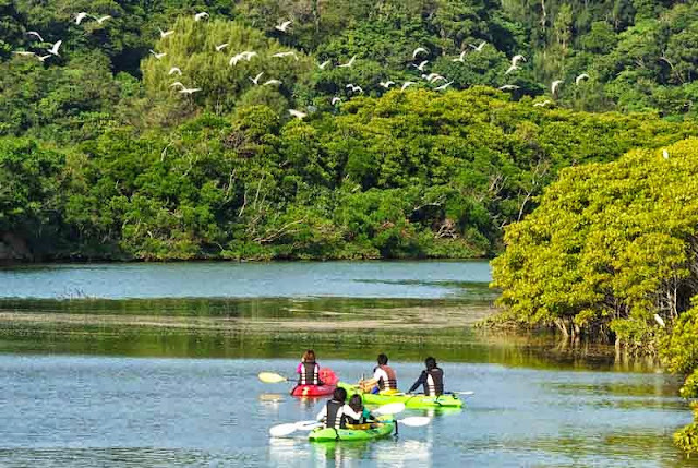 kayaks, river, mangrove,birds in flight