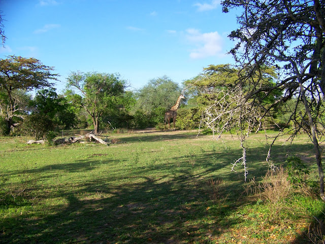 Game walking Safari Selous Reserve Tanzania
