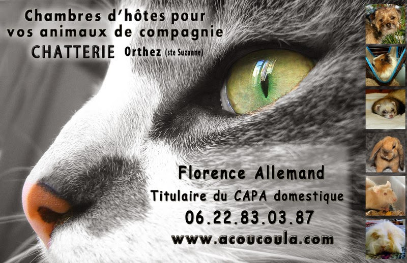 chat animaux