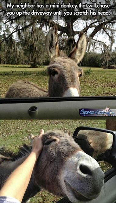 funny cute donkey picture
