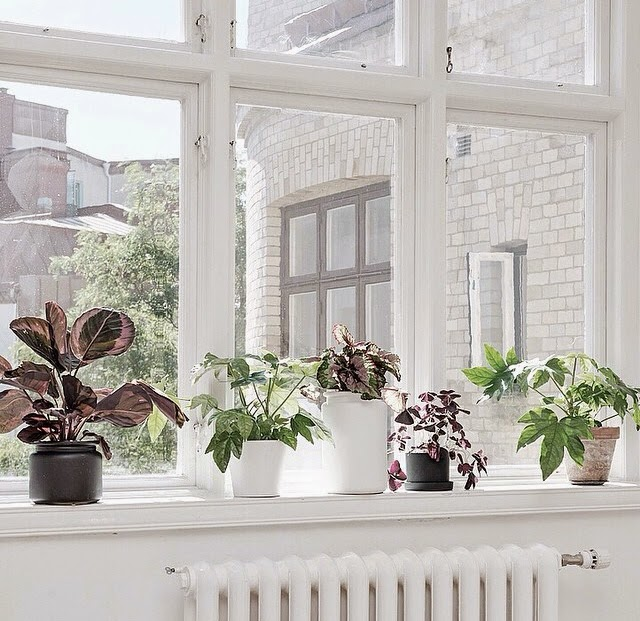 Decorar con plantas de interior para estar en contacto constante con la naturaleza