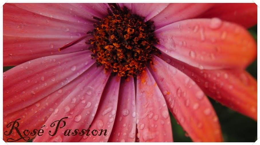 Rosé Passion
