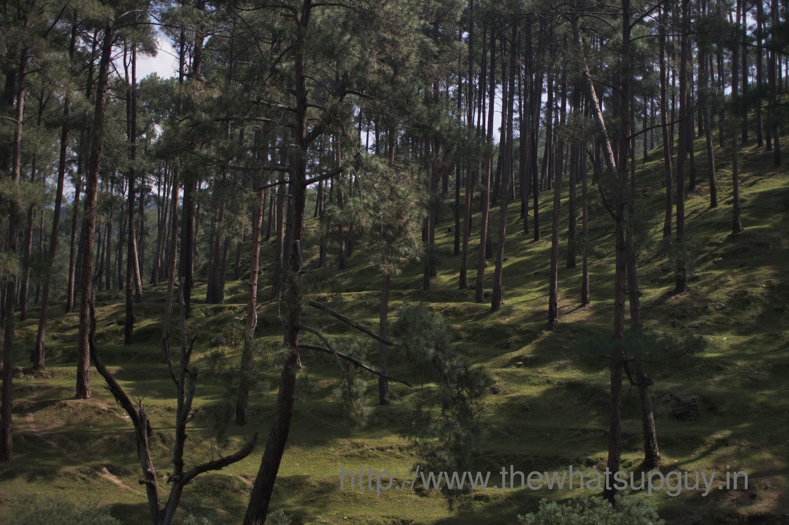 Trees-Day-0-Roopkund-Trek-India-Hikes