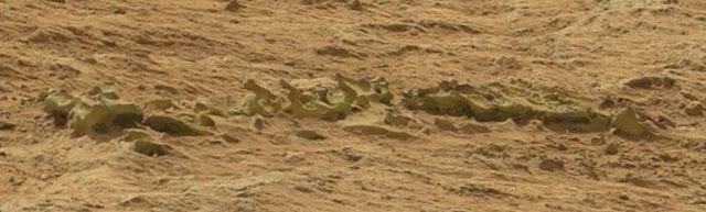 nasa-Curiosity-fossilized-Spine-edited-1.JPG