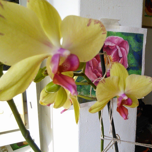 My orchids blowing on Instagram while I am off the blog
