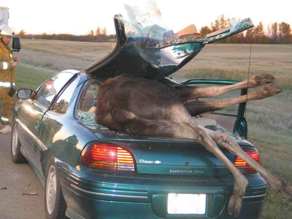 Pic Funny Pictures Funny Accident Picture Funny Accident Car Photo