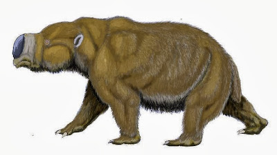 40,000 year old fossilised skeleton of giant wombat found in SE Australia