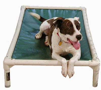 chew proof dog beds