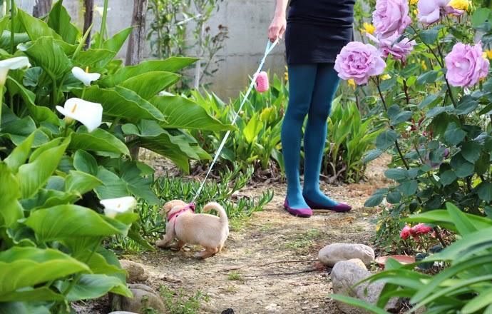 giardino, cucciolo di cane e ragazza